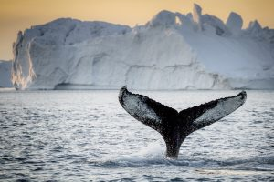 whale-watching-03