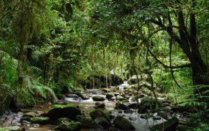 Ranomafana-National-Park